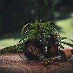 Utiliser les fleurs pour se soigner, un retour aux sources